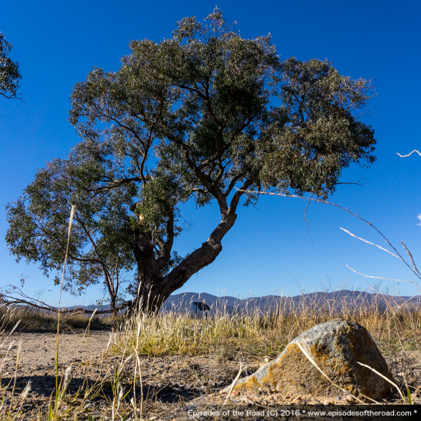 Lambrigg Lookout Tree